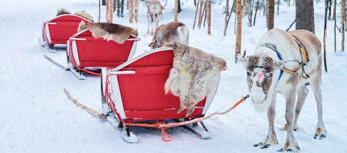 reindeer and christmas sleds